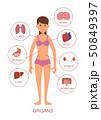 ヒューマン 人体 解剖学のイラスト 50849397