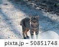 猫 ねこ ネコの写真 50851748
