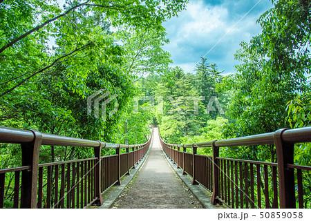 秋川渓谷 新緑の石舟橋 50859058