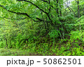新緑 エコロジー 自然の写真 50862501