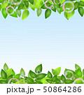 新緑 若葉 葉のイラスト 50864286