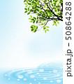 波紋 新緑 若葉のイラスト 50864288