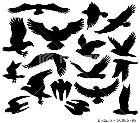 Predatory eagle or falcon hawk birds silhouettes 50866798