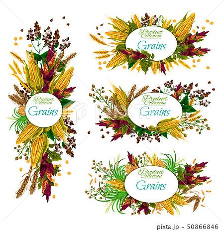Grain cereals, food crops wheat, rya and corn 50866846