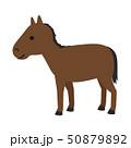 馬のイラスト。馬具を外して、おとなしく立っている競走馬。 50879892