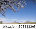 桜 ソメイヨシノ 春の写真 50888896