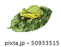 雨蛙19520pix7 50933515