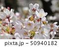 桜 花 春の写真 50940182