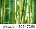 竹林 竹藪 竹の写真 50947260