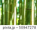 竹林 竹藪 竹の写真 50947278