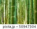 竹林 竹藪 竹の写真 50947304