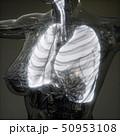 肺 ボディ 身体のイラスト 50953108