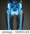 ボディ 身体 体のイラスト 50953128