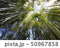 竹 竹林 竹藪の写真 50967858