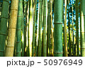 竹林 竹藪 竹の写真 50976949