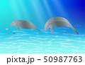 manatee swimming at underwater in the ocean 50987763