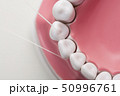写真 歯科 歯科衛生の写真 50996761