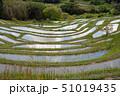 田畑 日本 米の写真 51019435