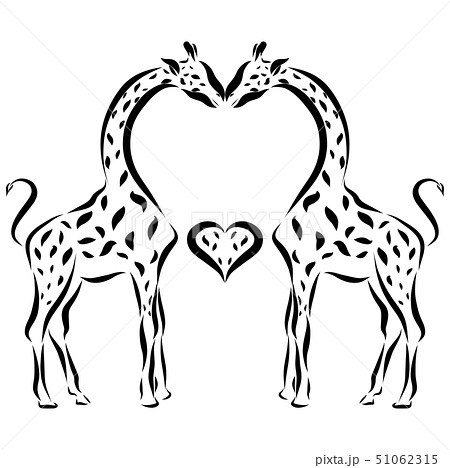 Kiss of loving giraffes and heart 51062315