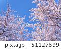 桜 春 花の写真 51127599