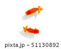 金魚 らんちゅう 51130892