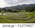 日本 稲 水田の写真 51274827