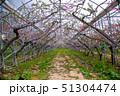 台湾 木 ツリーの写真 51304474