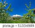林檎 りんご 果物の写真 51334989