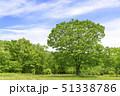 春 爽やかな新緑 51338786
