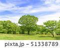 春 爽やかな新緑 51338789