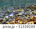 サケの遡上産卵 51339289