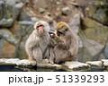 サルの毛繕い 51339293