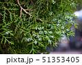 グリーン 緑 緑色の写真 51353405