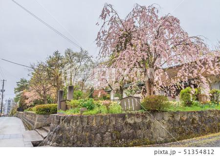 春の上山の武家屋敷通りの風景 51354812