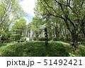 白旗山 山頂 森の写真 51492421