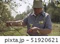 Senior woman volunteer examines the flowering willow 51920621