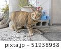 尾道の猫 51938938