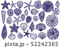 Isolated Seashell Starfish Urchin Set in Hand Drawn Style 52242365