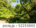 小網代の森 春 小網代の写真 52253603