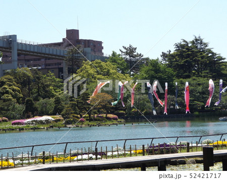 千葉公園の5月の青い空とコイノボリ 52421717