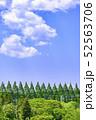 杜の都 仙台 西公園より新緑を愛でる 52563706