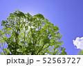 杜の都 仙台 西公園より新緑を愛でる 52563727