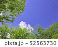 杜の都 仙台 西公園より新緑を愛でる 52563730