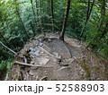 道 道すじ 森林の写真 52588903