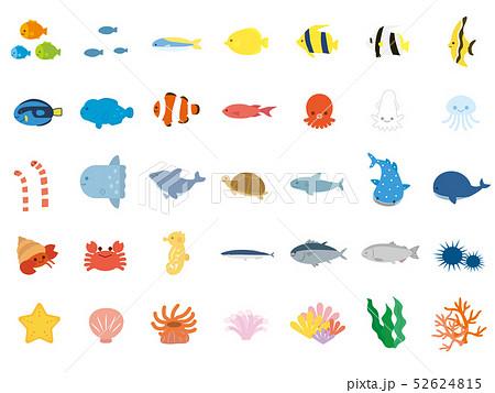 かわいい海の生き物のイラストセット 52624815