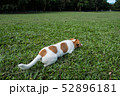 ジャックラッセルの子犬 52896181