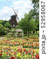 ふなばしアンデルセン公園の花めいろ。金魚草(キンギョソウ)と風車(5月)千葉県船橋市 52958067