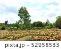 ふなばしアンデルセン公園の花めいろ。金魚草(キンギョソウ)と風車(5月)千葉県船橋市 52958533