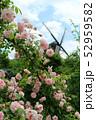 ふなばしアンデルセン公園、ローズガーデンのバラと風車(5月)千葉県船橋市 52959582