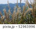四国カルスト高原のすすき 52963996